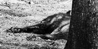 20090418_all-wolves-must-sleep_thumb